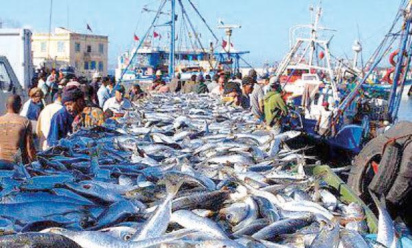 Pêches maritimes